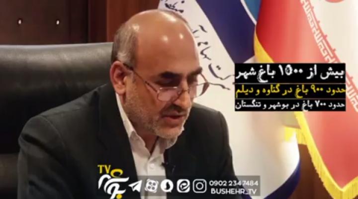 باغ شهرهای استان بوشهر آب دزدی می کنند